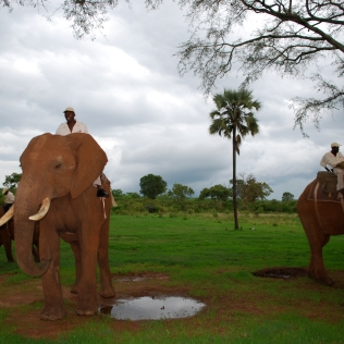 Elephants_Trainers_2_ElephantRiding_Activities_StanleyLivingstone