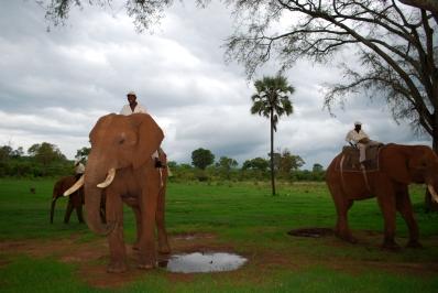Elephants_Trainers_2_ElephantRiding_Activities_StanleyLivingstone
