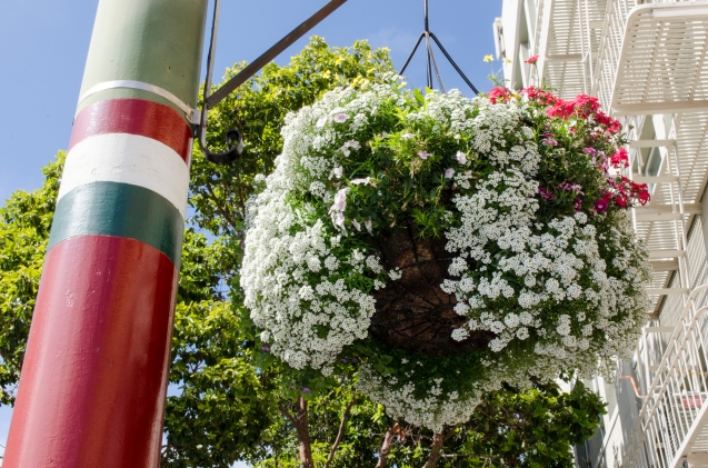 Red_Green_White_LittleItaly_NorthBeach_24_SanFrancisco_KAB