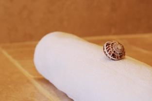 Seashell_On_Bathmat_CloseUp_Detail_TLW_LB