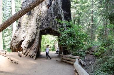 TuolumneGrove_09_YosemiteTour_KAB
